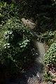 Jamaica CF9A5229.jpg