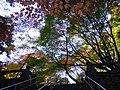 Japan Goshikidai 根香寺の「カエデ」.jpg