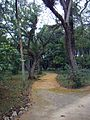 Jardim Botânico do Rio de Janeiro (3904276902).jpg