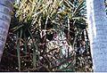 Jardin de Pamplemousses (3004475845).jpg