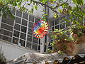 Jerusalem Mahane Israel Rainbow Pinwheel.jpg