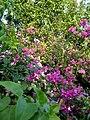 Jmkflowers.jpg