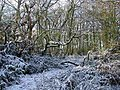 Jones's Wood in winter - geograph.org.uk - 1109017.jpg