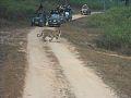 Kanha National Park jeep safari.jpg