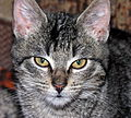Katinas, 2006-12-20.jpg