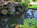 Kauai Koi Pond (3263701787).jpg