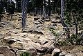 Kazdağı 09 2005 Blockmeer.jpg