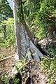 Khao Phra Wihan National Park - Don Tuan Khmer Ruins (MGK20860).jpg