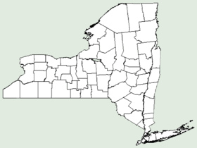 Kickxia spuria NY-dist-map.png