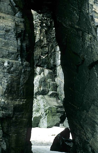 Cape Graham Moore - Kittiwakes at Cape Graham Moore