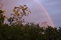 Klias Wetlands Rainbow and Proboscis Monkeys 01.jpg