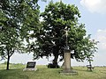 Klimkovice, Lípy u Hýlovského památníku (4).jpg