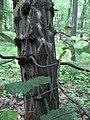 Kmen stromu (2).jpg