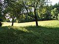 Koettmannsdorf Ploeschenberg Karutschnig-Wiese 19062011 223.jpg