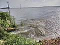 Kole Wetlands IMG 20170629 125854 (27).jpg