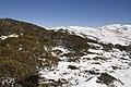 Kosciuszko National Park NSW 2627, Australia - panoramio (234).jpg