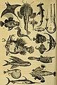 Kosmos, biblii͡a prirody - sochinenie A.N. Benera; Perevod s ni͡emet͡skago (1870) (14779583104).jpg