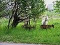 Kozy u Milíčova.jpg