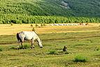 Krajobraz w Parku Narodowym Gorchi-Tereldż 31.JPG