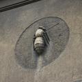 Kraków, ul. Św. Marka 8 (pszczoła strona lewa) fot. 007b.png