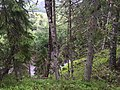 Kuusalu Parish, Harju County, Estonia - panoramio - Николай Семёнов (19).jpg