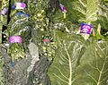 Lacinato Kale and Collard Greens.jpg