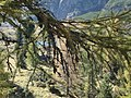 Lago piccolo del colbricon - panoramio.jpg