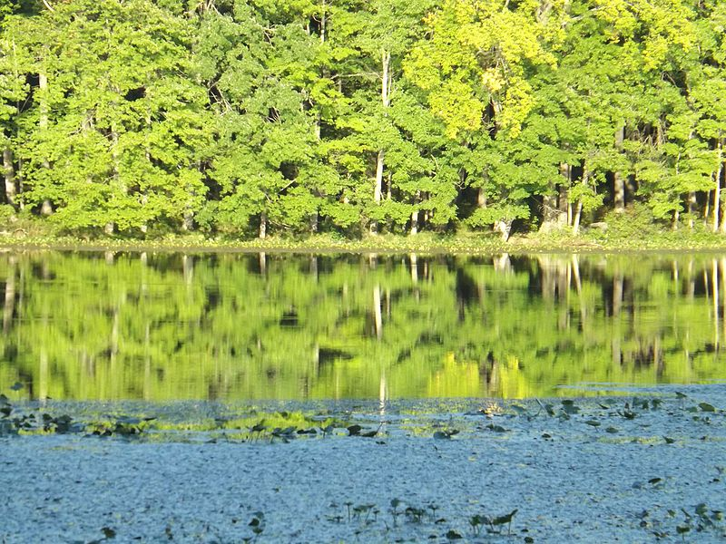 File:Lake Towhee reflection.jpg