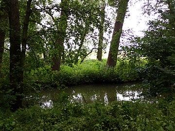 Landschaftsschutzgebiet Warmenau-Ufer LSG OS 00019 Datei 28.jpg