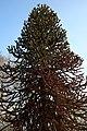 Le jardin botanique de Genève en hivers 03.JPG