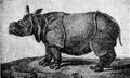 Le rhinocéros de Versailles.png
