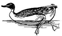 Lear - Duck.jpg