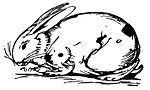 Lear - Rabbit.jpg
