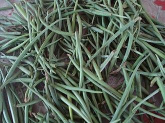 Leptadenia pyrotechnica - Image: Leptadenia pyrotechnica pods