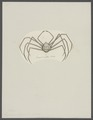 Leptopus longipes - - Print - Iconographia Zoologica - Special Collections University of Amsterdam - UBAINV0274 095 15 0003.tif