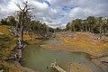 Lesy u Pampa Guanaco - panoramio.jpg