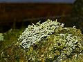 Lichen (2222921101).jpg