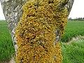 Lichen (28018549515).jpg