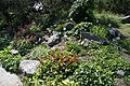 Ljubljana Botanic Garden - rockery.jpg