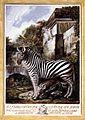 Luis Paret Y Alcazár - Zebra - WGA17024.jpg
