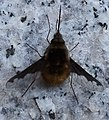 MS Insekt 183919.jpg