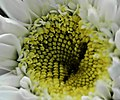 Macro Spiral Flower.jpg