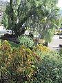 Madeira em Abril de 2011 IMG 1751 (5663768746).jpg