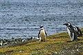 Magdalena Island, Chile (Unsplash).jpg