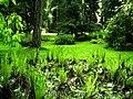 Mai - Botanischer Garten Freiburg - 2016 - panoramio (3).jpg