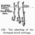 Manual of Gardening fig122.png