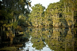 Lake Bistineau State Park - Scenic byways and marshlands are a common attraction for park visitors.