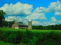 Maple Ridge Farm - panoramio.jpg