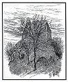 Marenberg Castle 1910.jpg