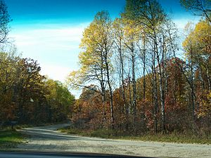 Marinette County, Wisconsin - Marinette County woods in fall